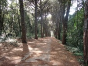Rovinj running path 1